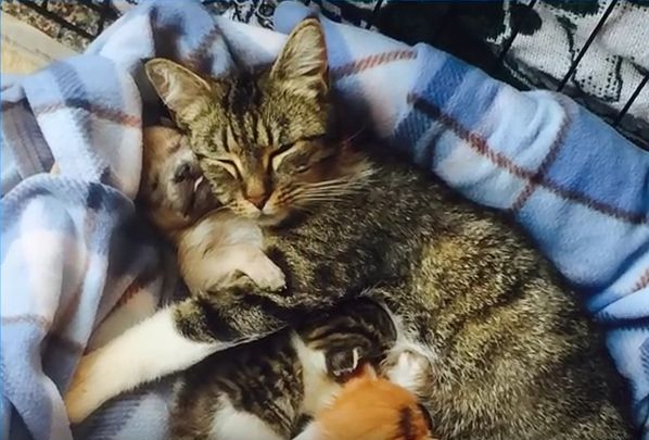 Puppy Joins Litter of Kittens