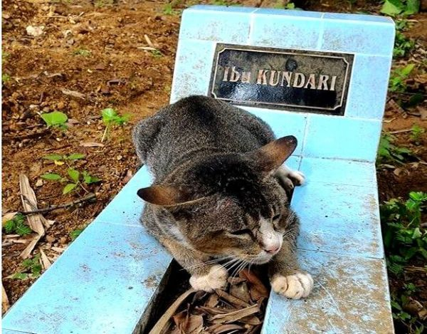 This Cat Won't Leave His Owner's Grave