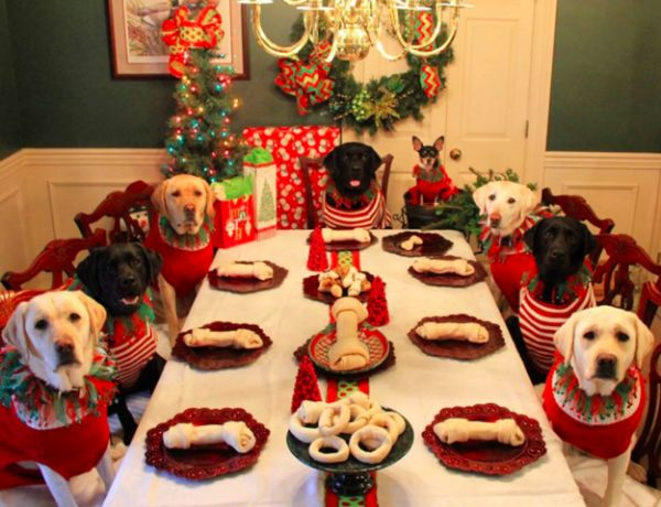 Couple Sets Up A Christmas Dinner Table For Dogs