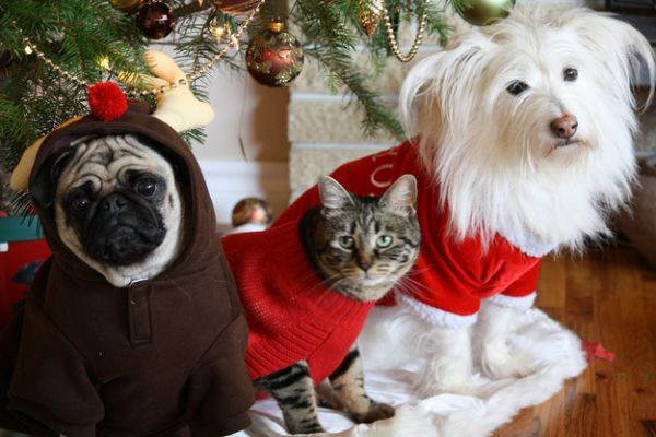 Thing ugly Christmas sweaters are just for humans? Think again. There are plenty of critters out there that have fantastically terrible sweaters of their