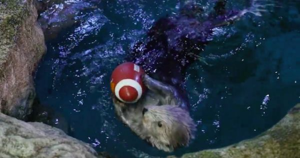 Are You Ready for Some Otterball?
