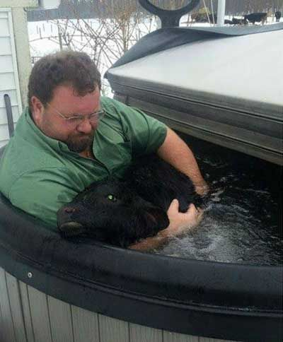Farmer Uses Hot Tub To Save Frozen Baby Bull Neatorama