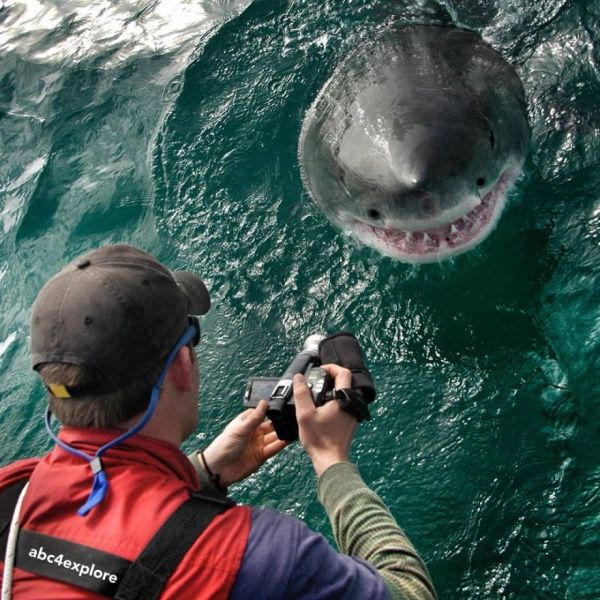 9 Behind-the-Scenes Secrets of a Shark Week Cinematographer
