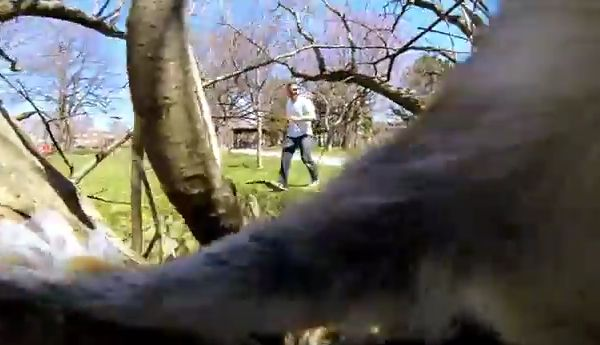 Squirrel Absconds with GoPro Camera