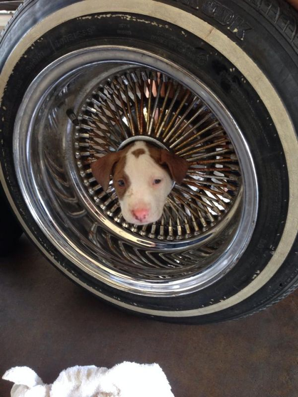 Firefighters Free Puppy Stuck In Car Wheel Neatorama