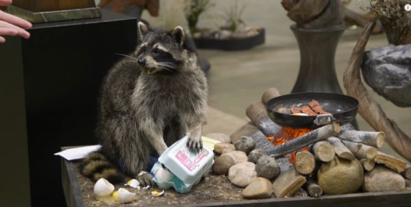 The 2017 World Taxidermy Championships
