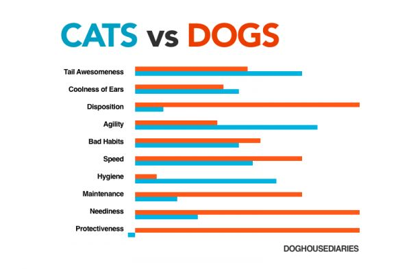 Neediness Of Dogs Vs Cats