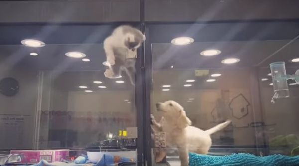 The Kittens Great Escape