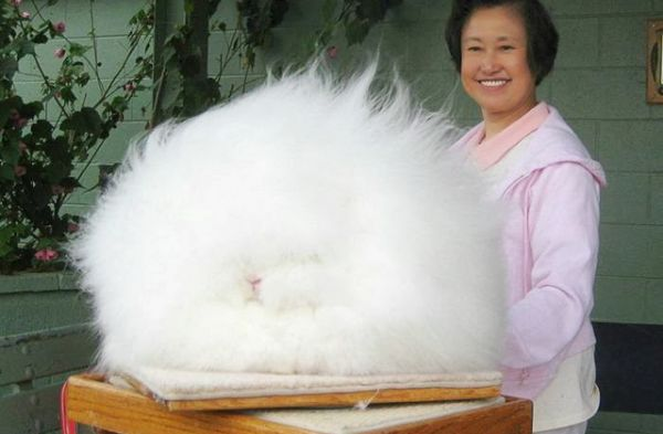 Cutest Dog In The World Guinness 2013 say hello to the world's largest ball of fluff - neatorama