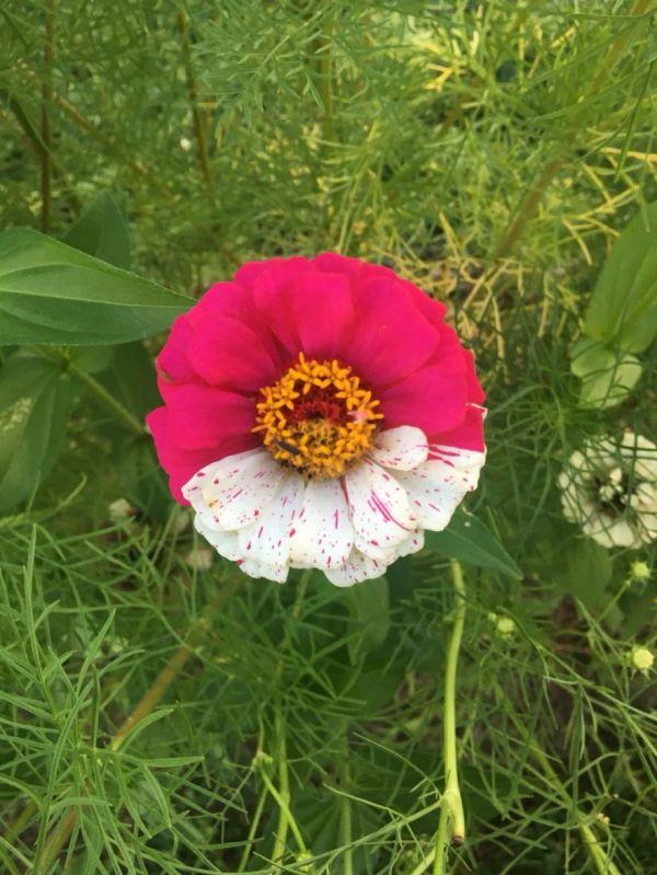 Pokeball Flower