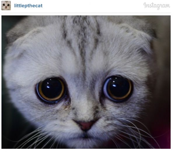 Meet The Cutest Sad-Faced Kitty On Instagram