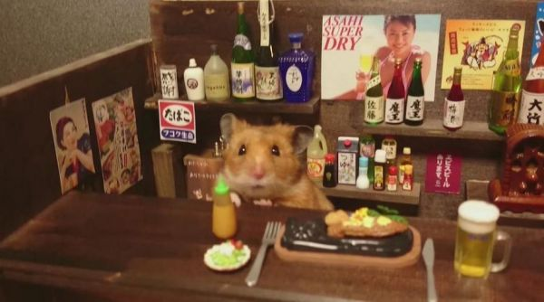 The Hamster Bartender Neatorama - Hamster bartenders cutest thing youve ever seen