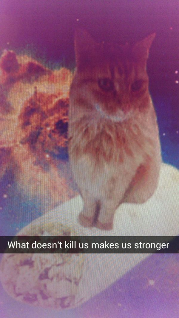 Cats In Space With Inspirational Quotes Neatorama