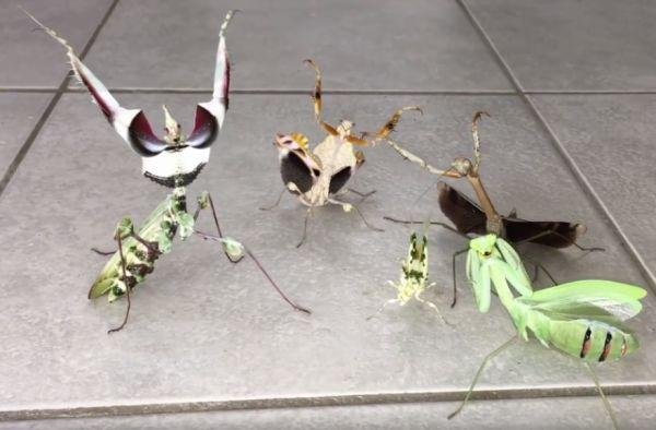 Mantis Squad