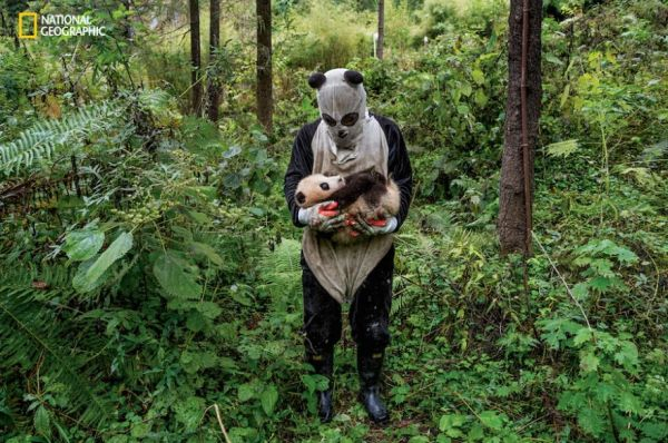 Photographer Dresses Up Like A Panda To Snap Pics Of Them In The Wild