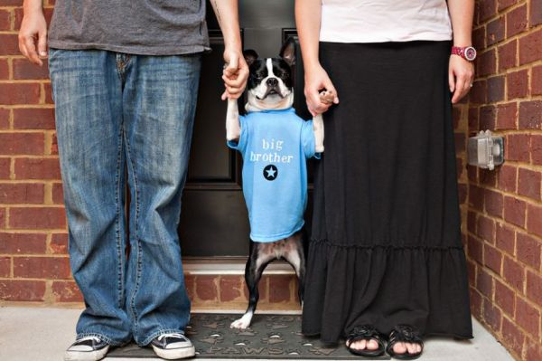 Thats One Way to Announce a Pregnancy Neatorama – Baby on the Way Announcement