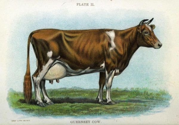 In 1933, Four Cows Went to Antarctica
