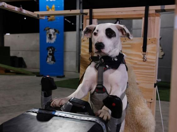 New reality tv show will teach dogs how to fly planes for Small dogs on airplanes