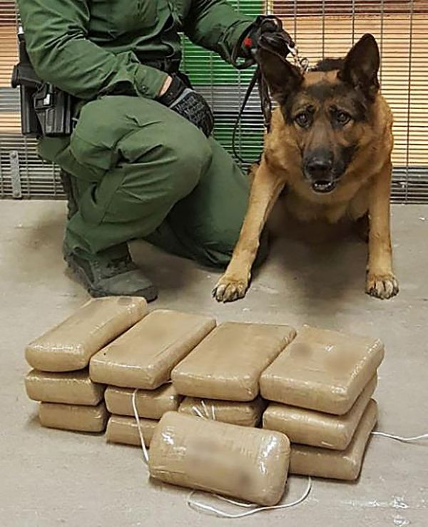 How Do They Train Drug Dogs
