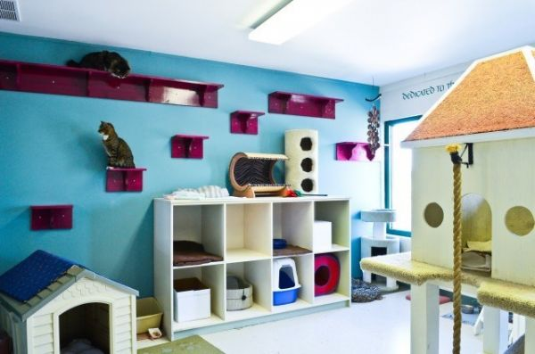 18 Amazing Cat Room Designs For Your Inspiration