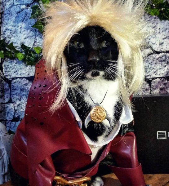 David Bowie's Jareth Costume Who Wore It Better: The Cat or the Dog?