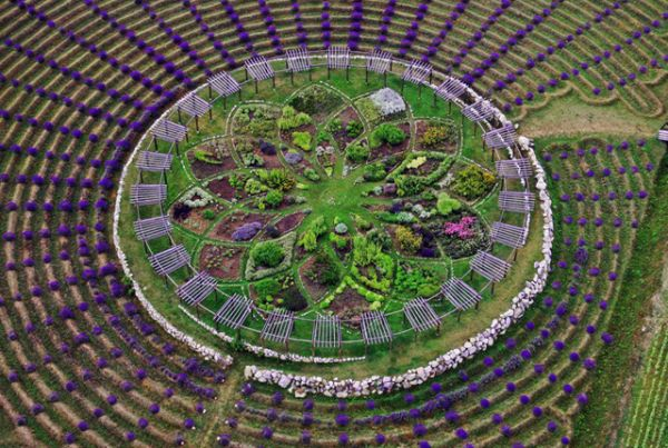 The Amazing Lavender Labyrinth in West Michigan