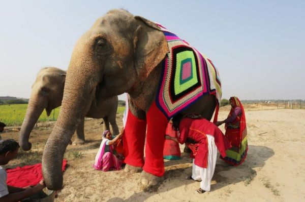 People Are Knitting Sweaters to Help Rescued Elephants