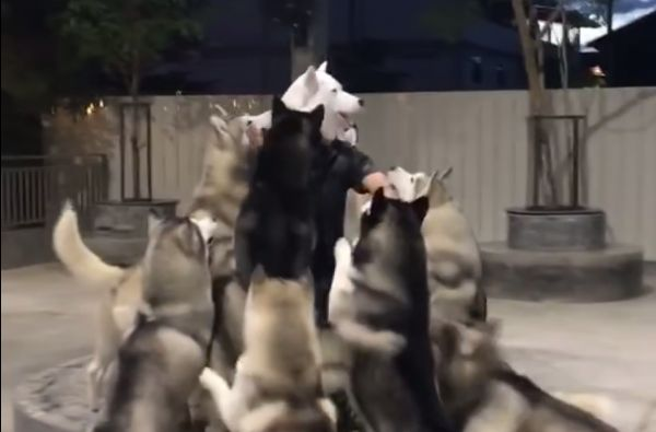 The Man in the Husky Mask