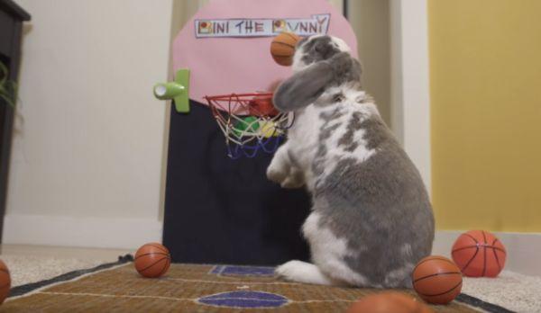 Bini the Basketball Bunny Achieves World Record