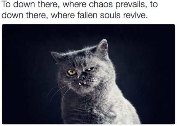 black metal cats reveals the dark thoughts of our feline friends