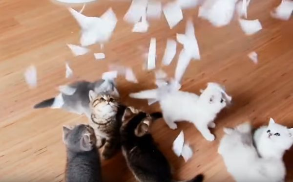 Kittens in a Pile of Paper