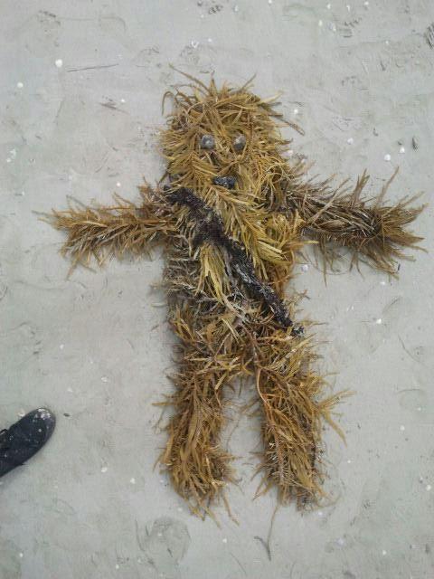 seaweed Chewbacca