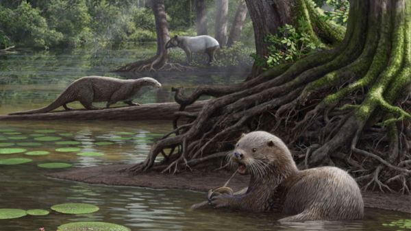 Six Million Years Ago There Were Otters the Size of Wolves
