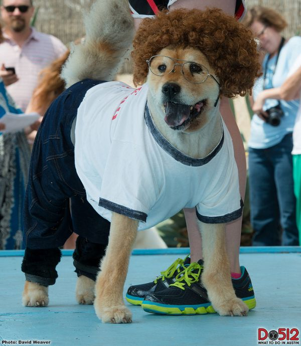 a chow chow as napoleon dynamite - Black Dynamite Halloween Costume