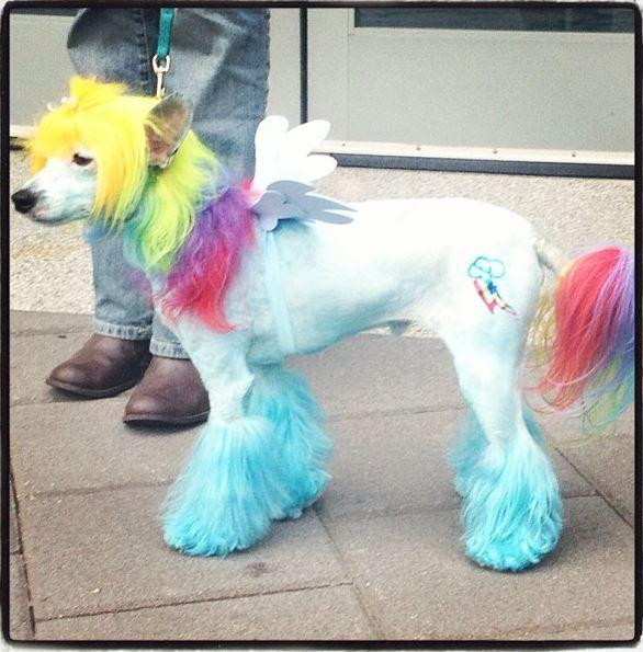 Amazoncom dog rainbow costume