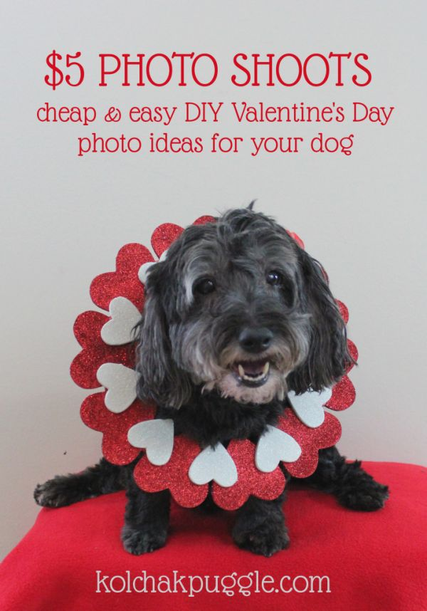 Easy And Cheap Valentineu0027s Day Photo Shoot Ideas For Your Dog