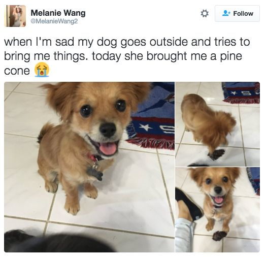 dog pictures that will make you feel better about life