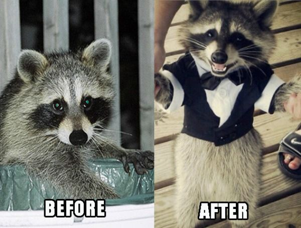 1407323563 0 raccoons inspired to greatness by guardians of the galaxy neatorama