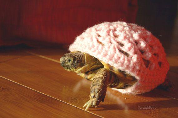 tortoise cozy