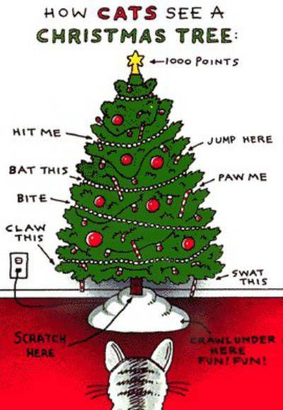 How Cats See A Christmas Tree - Neatorama