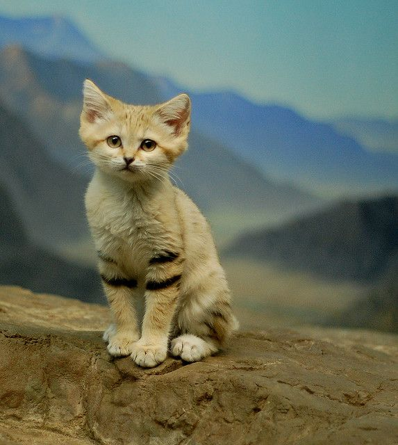 The 10 Cutest Baby Animals of the Desert - Neatorama