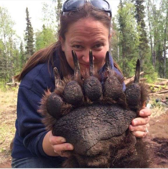 This Is How Big a Bear's Paw Is - Neatorama