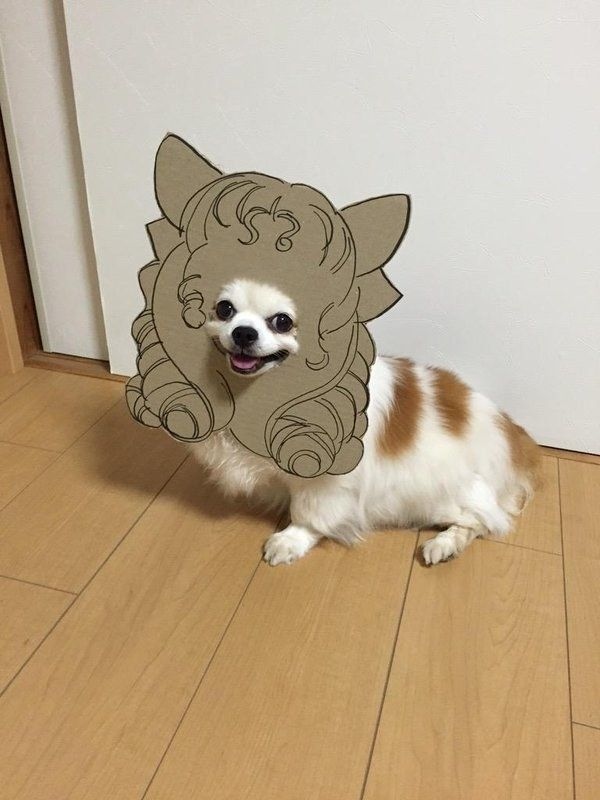 This Dog Loves to Play Dress Up With Cardboard Cutouts