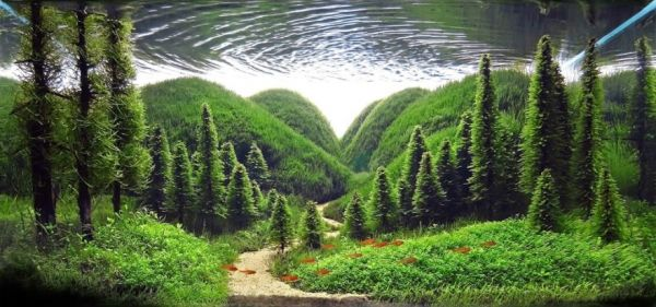 The incredible art of aquarium landscaping neatorama Aquarium landscape