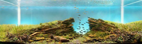 The Incredible Art of Aquarium Landscaping - Neatorama