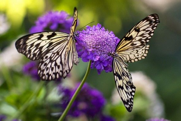 Interesting Facts About Butterflies Neatorama