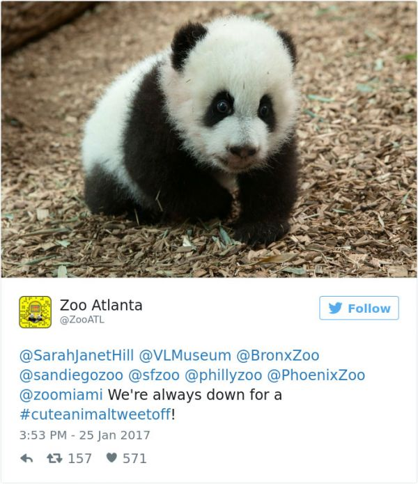 Googlier philadelphia search date 20180221 so when the national zoo tweeted a pic of an adorable gray seal pup other zoos saw it as a challenge so they started a cute animal tweet off battle with fandeluxe Images