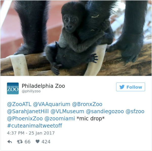 Googlier philadelphia search date 20180221 see zoos get into brutal cuteanimaltweetoff battle and its exactly what the internet needed here fandeluxe Images