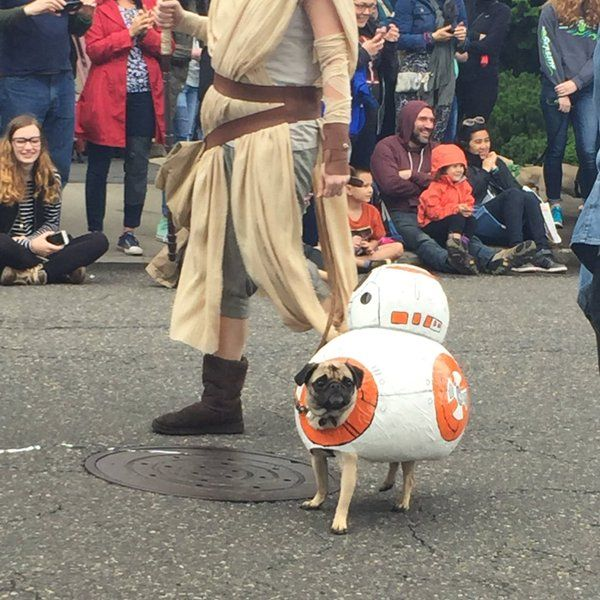 This Star Wars Pug-Crawl is the Cutest Geek Dog Fest Ever ... Jabba The Hutt Costume For Dogs