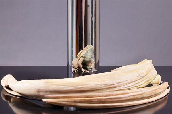 Hurwitz frog